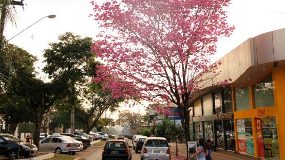 Cafelândia Paraná fonte: www.viajeparana.com